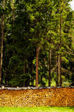 Forest and wood. Italy - Trentino Alto Adige - San Martino in Badia (Sankt Martin in Thurn in German, San Martin de Tor in Ladino) is an Italian town of 1,726 stock photos