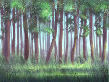 Forest. Wood in the sun, green grass Royalty Free Stock Images