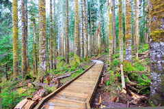 Forest and wood trail in rainy spring day. Stock Images