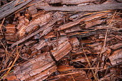 Forest wooden chips stock image