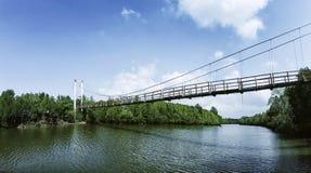 Forest Wooden för Thung Kha fjärdmangrove gångbana Chumphon Thailand Arkivbild