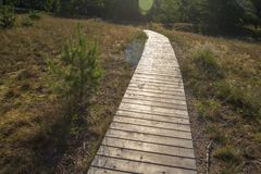 Forest wooden path stock photos