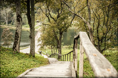 Forest and wooden stairs Royalty Free Stock Images