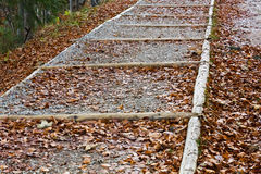 Forest wooden steps  at autumn leaves Stock Photo