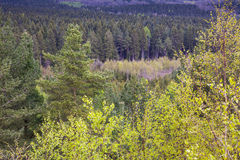 Forest Woodland Stock Photography