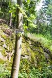 Forest Woodland noir près de village de Bergheim Image stock