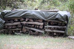 Woodpile on the edge of the forest. Forest. Woodpile on the edge of the forest stock photos