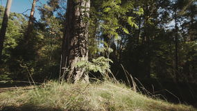 Forest. The woods a day in the sun-lit stock footage