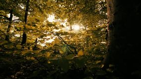 Forest woods trees leaves sun flare. Video of forest woods trees leaves sun flare stock video