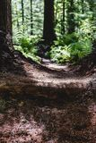 Forest work green and brown hiking trail path walkway. With morning light stock images