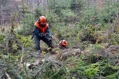 Forest worker, lumberjack Stock Photo