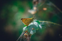 Forest yellow butterfly sits on a piece Royalty Free Stock Images