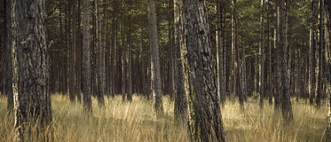 Forest with yellow grass and beautiful atmosphere Stock Photo