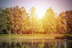 Forest with yellow trees  reflects in lake Stock Photo