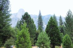 Forest. Yosemite forest view royalty free stock image