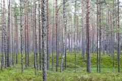 Forest. Royalty Free Stock Photos