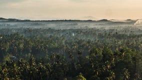 Forest Zoom Timelapse tropical 4k metrajes