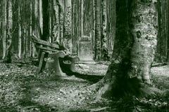 forest2石头 免版税图库摄影