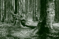 forest2 kamień Fotografia Royalty Free