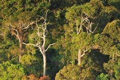 Foresta 1 Fotografie Stock Libere da Diritti