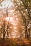 In foresta Fotografie Stock Libere da Diritti