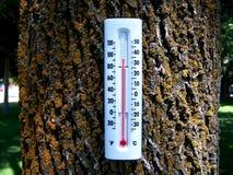 Foresta 2 di riscaldamento globale fotografia stock