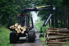Foresta #3 Fotografia Stock Libera da Diritti