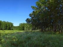 Foresta Fotografia Stock Libera da Diritti