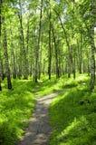 Foresta Fotografie Stock
