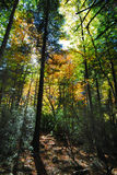 foresta Immagine Stock Libera da Diritti