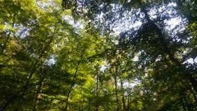 Foresta 25 Immagini Stock