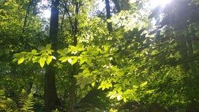 Foresta 42 Immagine Stock