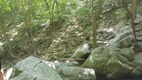 Foresta 47 Immagini Stock