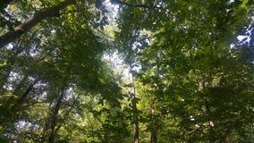 Foresta 45 Fotografia Stock Libera da Diritti