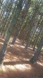 Foresta 78 Immagini Stock
