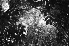 Foresta Fotografia Stock