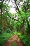 Foresta Fotografia Stock