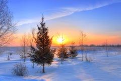 Foresta ad alba sulla mattina gelida di inverno Immagini Stock Libere da Diritti