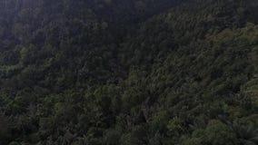 Foresta aerea con nebbia archivi video