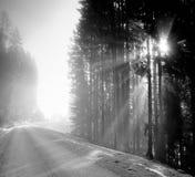 Foresta al crepuscolo Immagine Stock