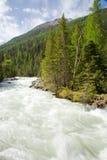 Foresta al fiume fotografie stock libere da diritti