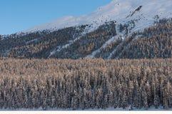 Foresta al piede delle montagne innevate Fotografie Stock