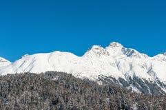 Foresta al piede delle montagne innevate Fotografia Stock