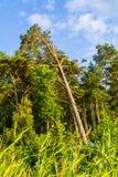 Foresta al sole Fotografia Stock Libera da Diritti