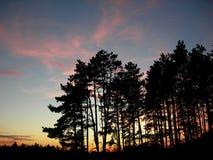 Foresta al tramonto Fotografia Stock
