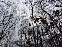 Foresta, alberi scuri Stagione di autunno Fotografie Stock Libere da Diritti