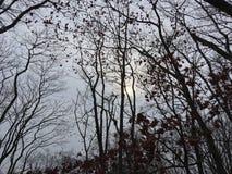 Foresta, alberi scuri Stagione di autunno Immagini Stock