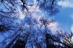 Foresta alla notte Immagini Stock