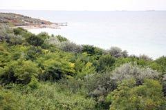 Foresta alla spiaggia Immagini Stock Libere da Diritti