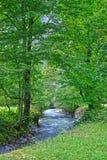 Foresta alla valle di Lauterbrunnen nel cantone di Berna in Svizzera Immagine Stock Libera da Diritti